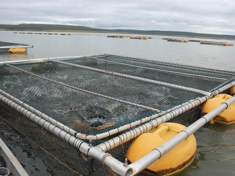Tanque rede rhv 3 00 x 3 00m telas e tanque rede rhv for Manual de piscicultura tilapia